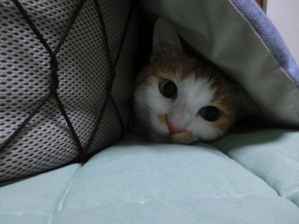 かくれてじっとしている猫(イメージ)
